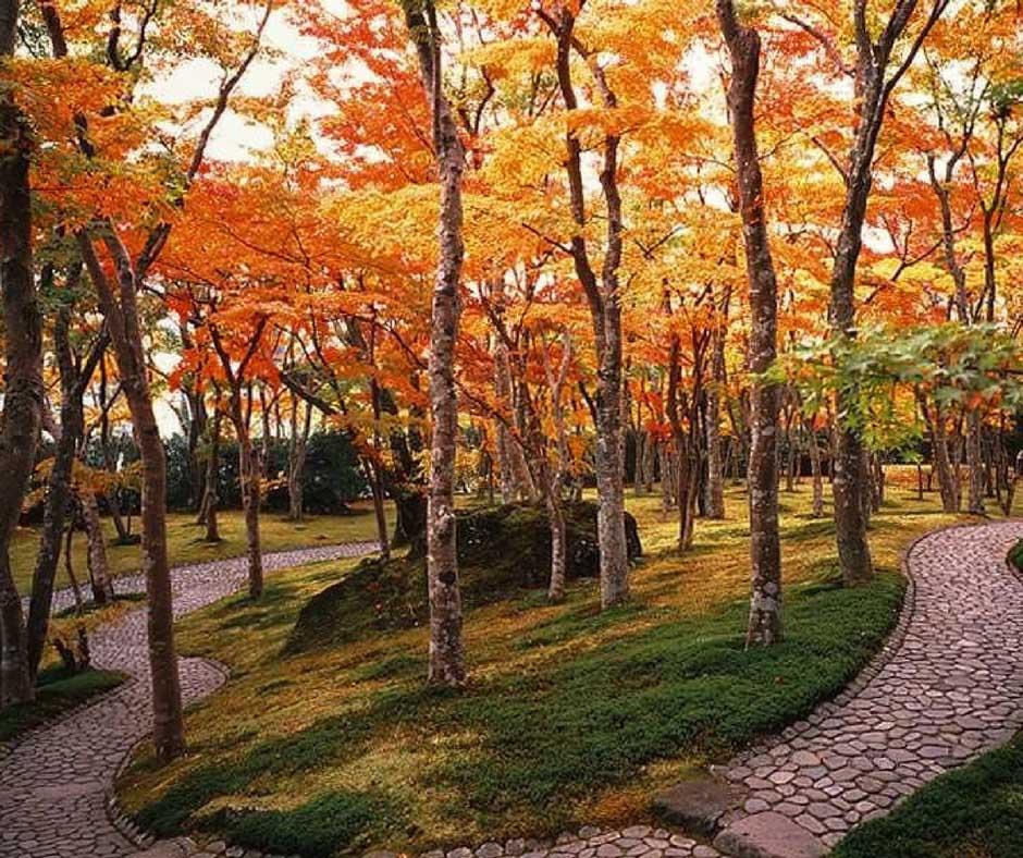 ใบไม้เปลี่ยนสีฮาโกเน่ ที่ Museum of Art