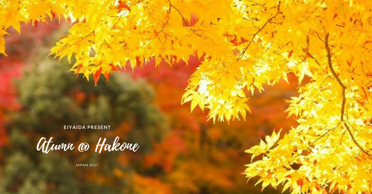ใบไม้เปลี่ยนสีฮาโกเน่