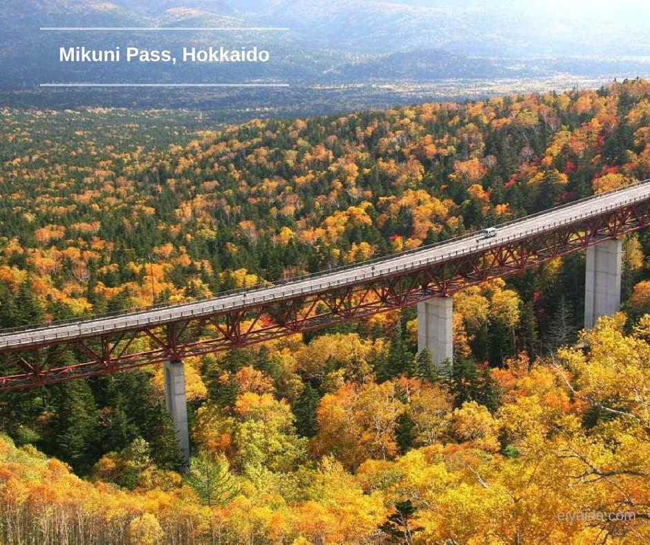 ใบไม้เปลี่ยนสี ที่ Mikuhi Pass
