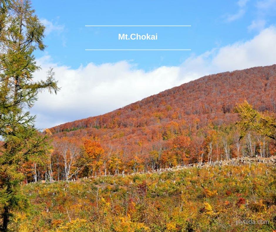 ใบไม้เปลี่ยนสี ที่ Mt. Chokai