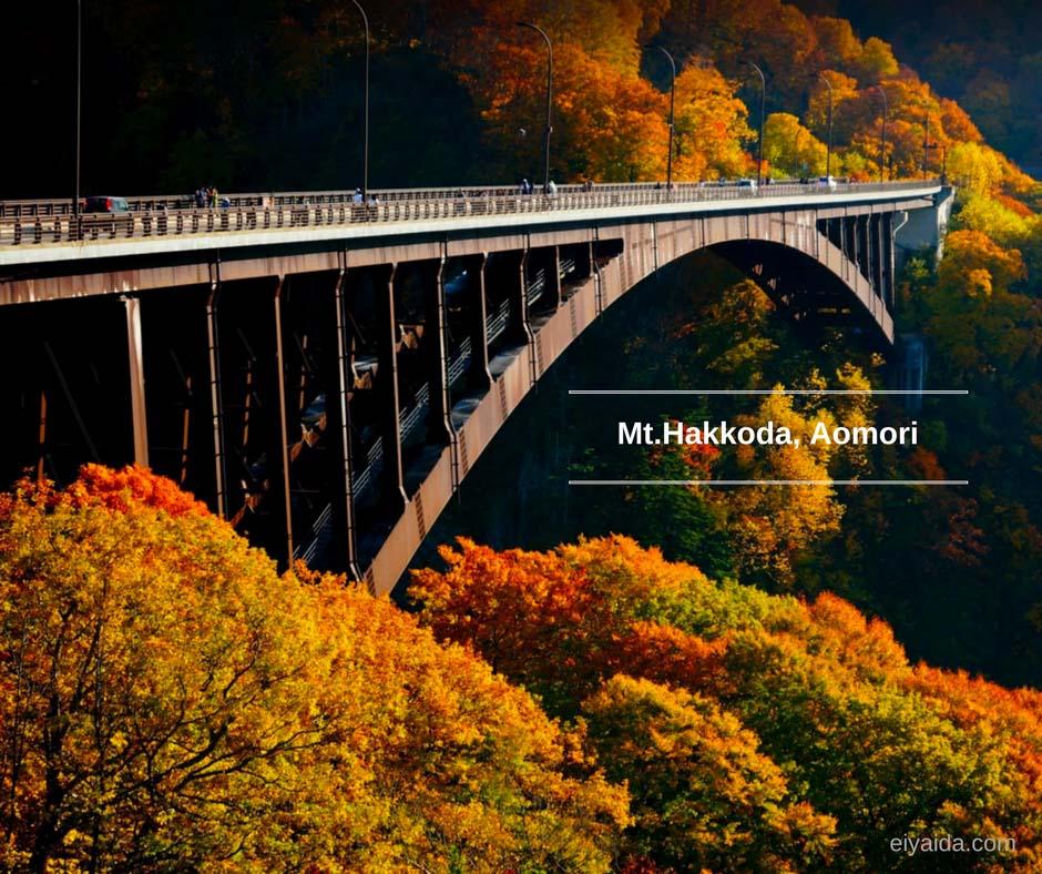 ใบไม้เปลี่ยนสี ที่ Mt.Hakkoda Aomori