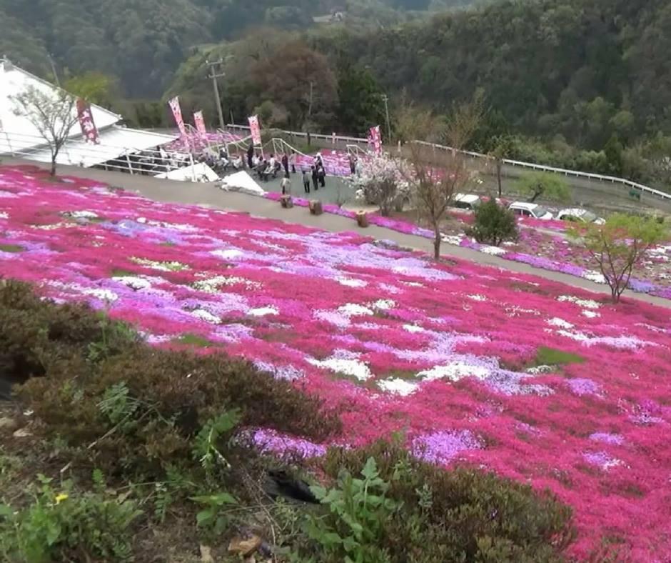 เที่ยวญี่ปุ่นพฤษภาคมที่มิชิบะ