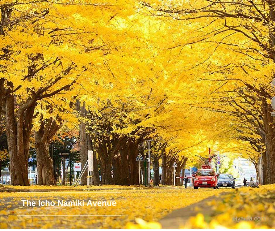 ใบไม้เปลี่ยนสี ที่ Icho Namiki