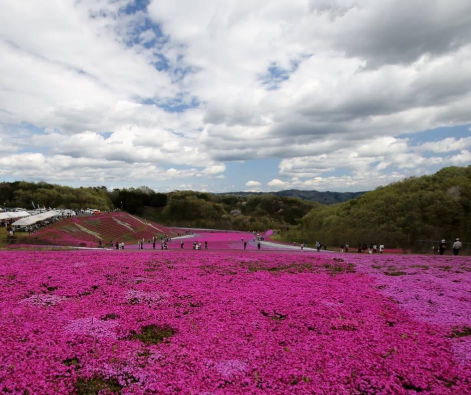 เที่ยวญี่ปุ่นชมพิงค์มอสที่โทชิงิ