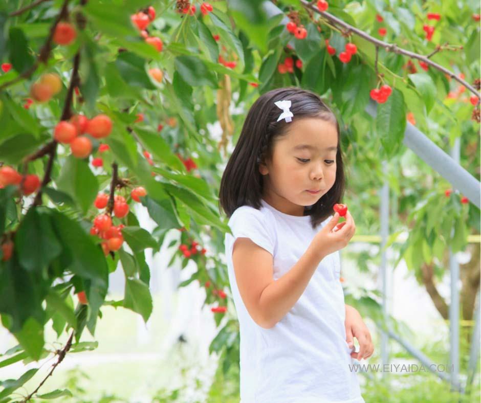 ฤดูการแห่งผลไม้ญี่ปุ่น