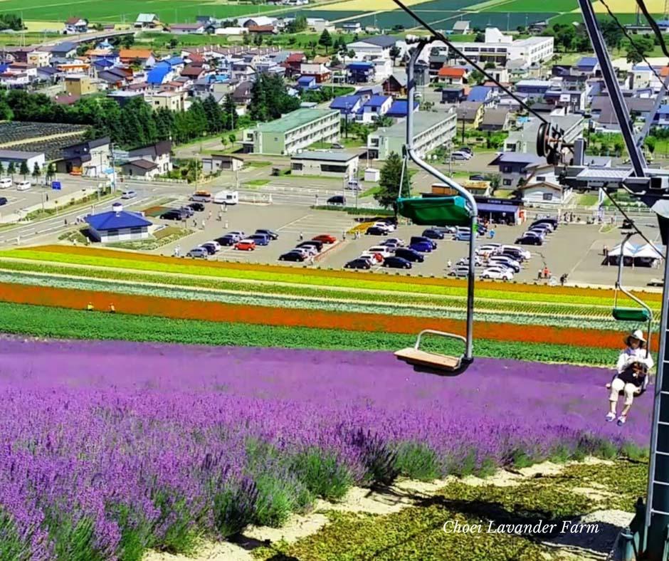 เที่ยวญี่ปุ่น Choei Lavender Farm