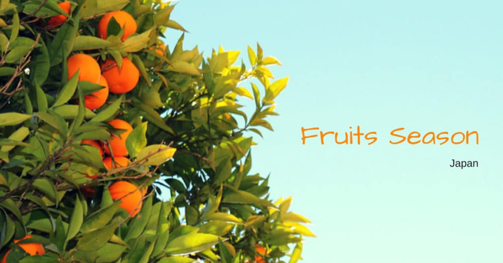 เที่ยวญี่ปุ่นเก็บผลไม้ ตลอดทั้งปี