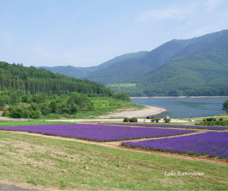 ลาเวนเดอร์วิวทะเลสาปที่ Lake Kanayama