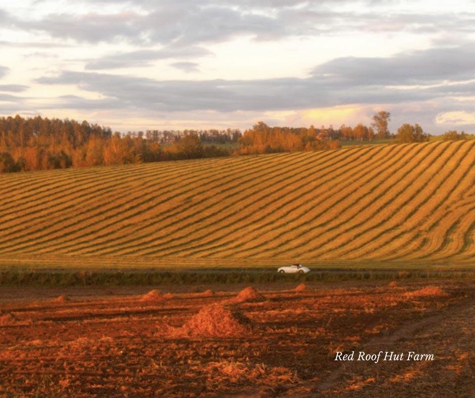 ญี่ปุ่นวิวเท็กซัส ที่ Red Roof Hut Farm