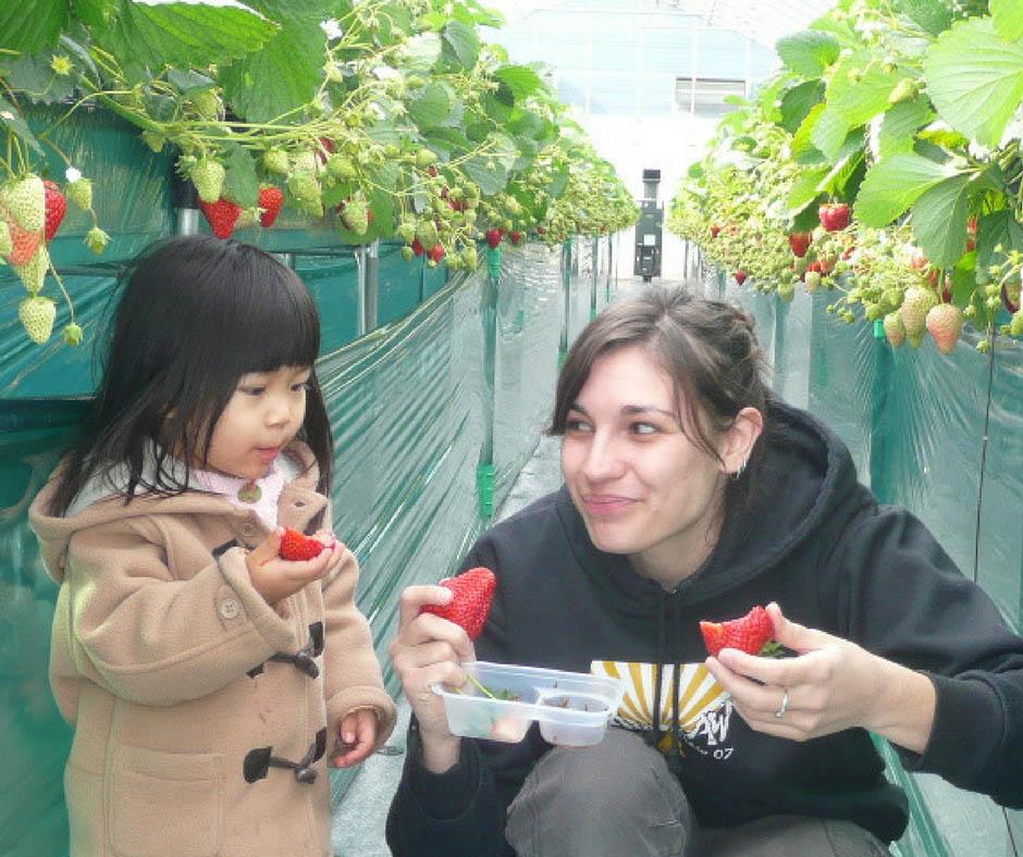 เที่ยวญี่ปุ่นเก็บผลไม้ ที่ Dragon Farm