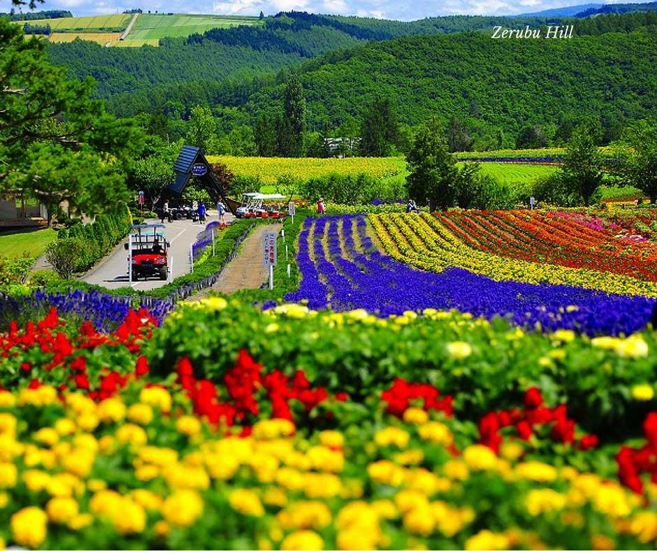 ทำสวนดอกไม้แปลงสาธิต ชมลาเวนเดอร์ ที่Zerubu Hill
