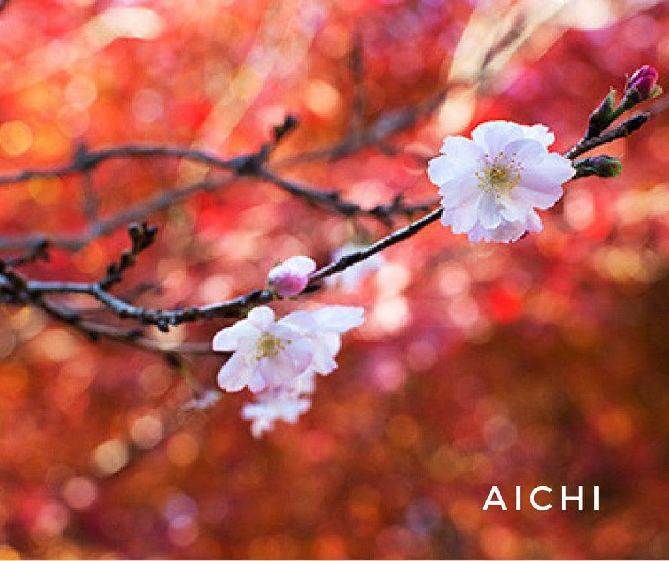 ใบไม้เปลี่ยนสีญี่ปุ่น Aichi