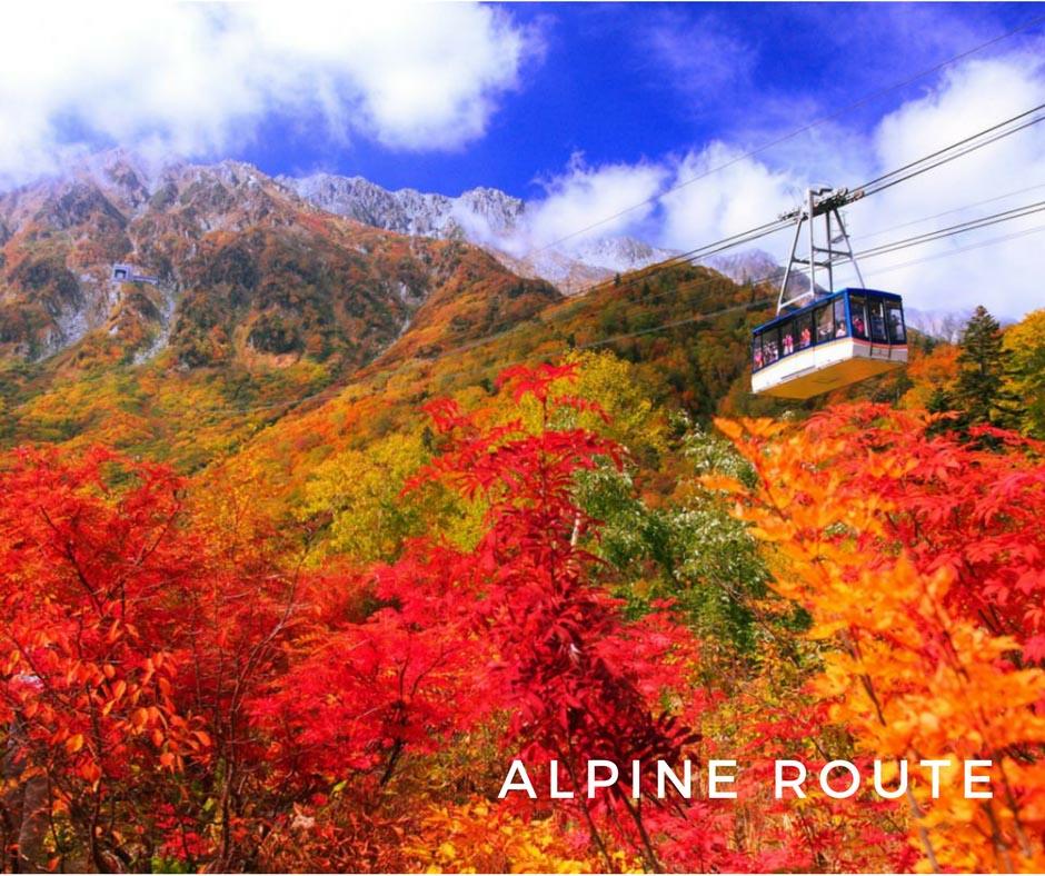 ใบไม้เปลี่ยนสีญี่ปุ่น Alpine Roue