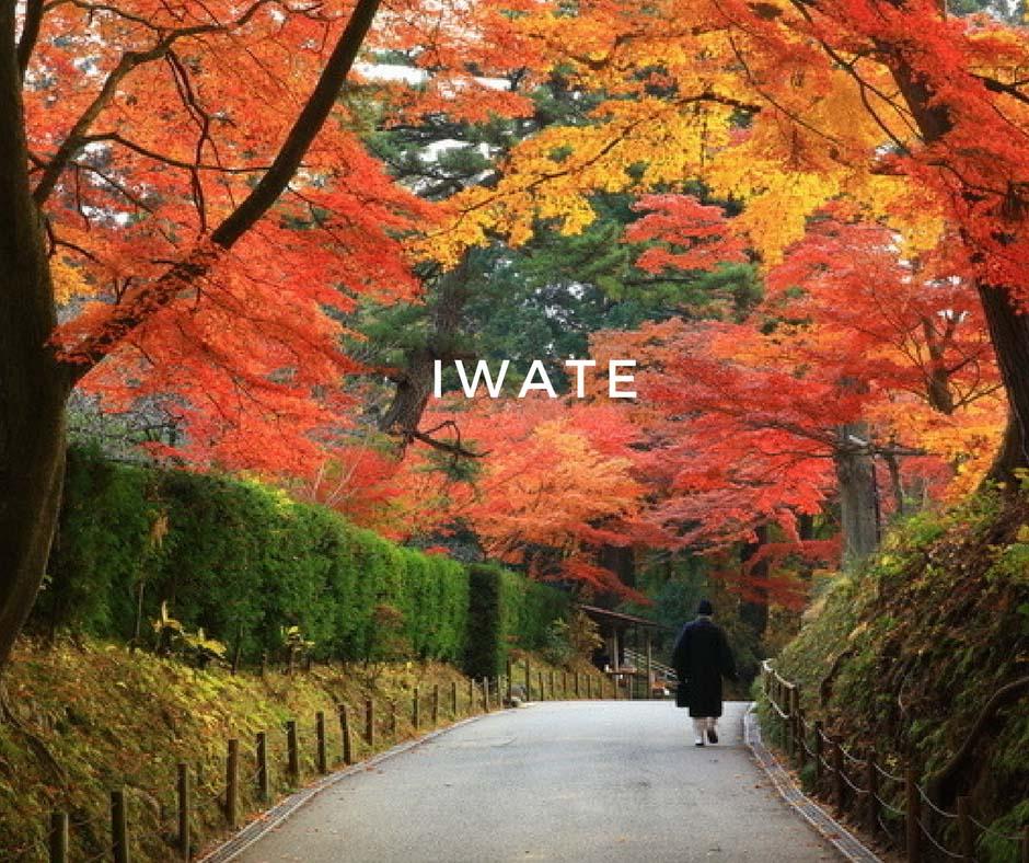 พยากรณ์ใบไม้เปลี่ยนสี Iwate