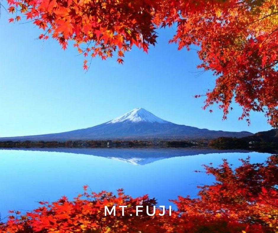 พยากรณ์ใบไม้เปลี่ยนสี Mt. Fuji