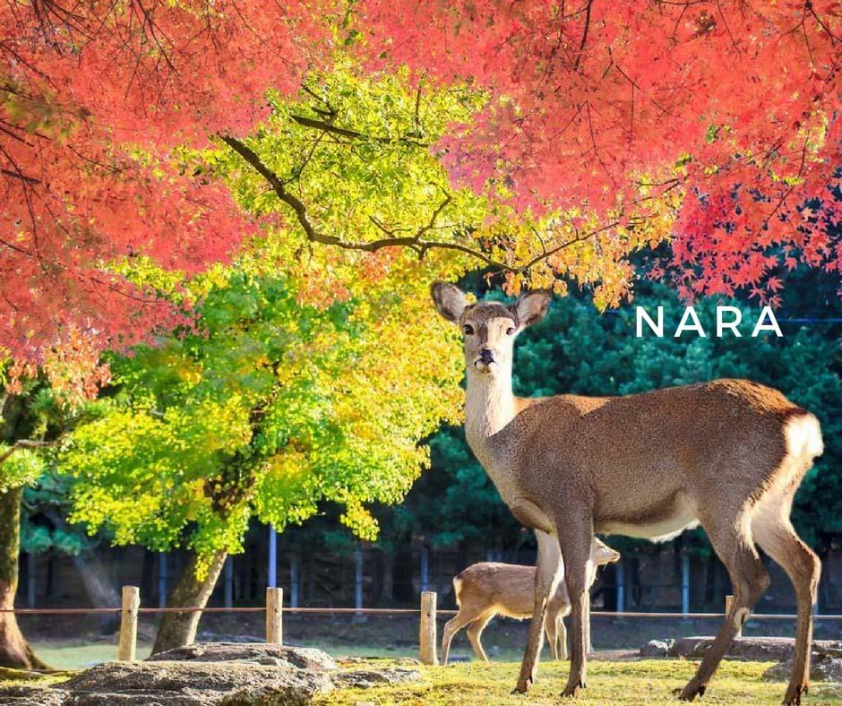 พยากรณ์ใบไม้เปลี่ยนสี Nara