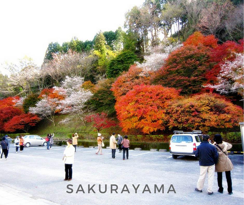 พยากรณ์ใบไม้เปลี่ยนสี Sakurayama