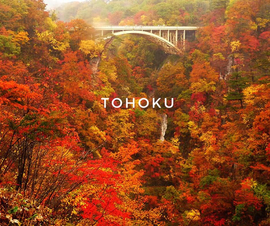 พยากรณ์ใบไม้เปลี่ยนสี Tohoku