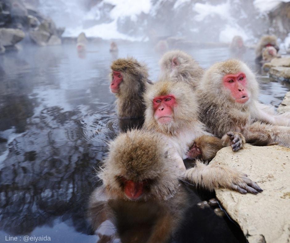 ถ่ายรูปลิงออนเซนที่นากาโน่