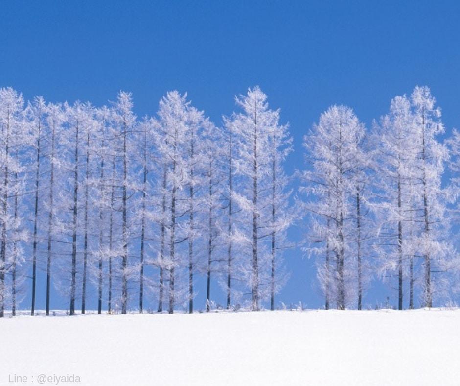 เที่ยวญี่ปุ่นหน้าหนาวที่บิเอะ