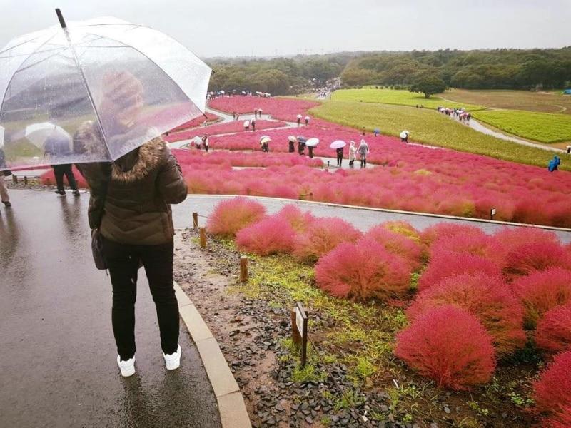 ฝนอาจตกมาได้ทุกฤดู