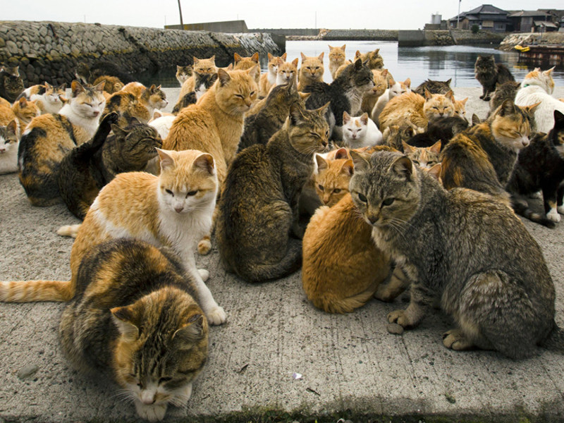 Aoshima-Cat Island